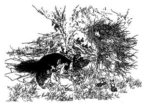 出雲の国の肥河の川上に降り立ったスサノオノミコト(鮮斉画譜より)